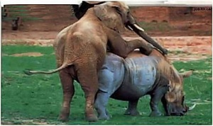 This is what happensWhen a real Republican meets a RINO!
