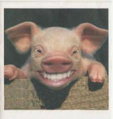 Smiling Piggy Wins in the End