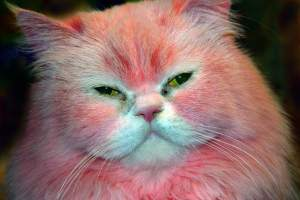 How Many of You are Pink Pussies?
