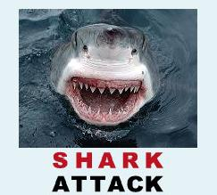 shark attack great white