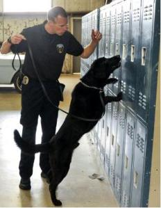 dog and lockers