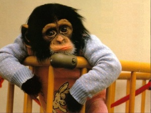 Poor Monkey Mayor!Still grinning stupidly on camera but he's a sad little monkey! Hasn't a clue what to do!